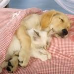 cat cuddling dog